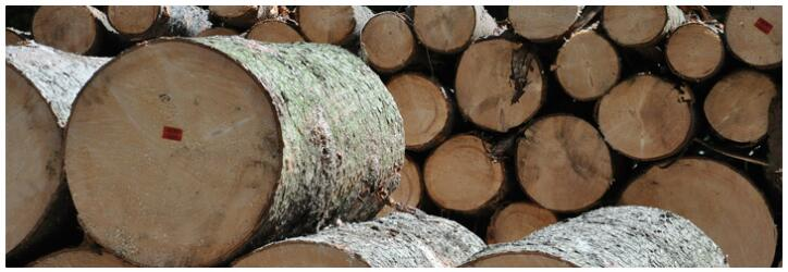 Not all wood is suitable for building furniture